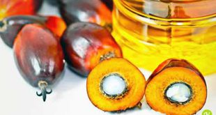L'olio di palma sostenibile non fa male
